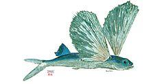 Gyotaku Fish-Printing Art from Hawaii | Sport Fishing Magazine