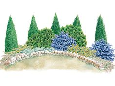 Evergreen Screen Garden Plan