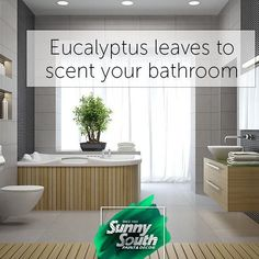 Eucalyptus is an excellent air-freshener for your bathroom. It is widely used in spas, so follow their example and take it home. Put some leaves of this plant in the bathroom and create the perfect relaxing atmosphere to enjoy this space. 📍Sunny South is your paint and decoration specialty store. Come visit us at 3202 and 3031 Coral Way; 2428, SW 8th St; 11865, SW 26th St; 16181 NW 57th Ave; 108 Weston Rd, Sunrise; 1101 S Federal Hwy, Pompano Beach. #SunnySouth #Miami #Eucalyptus #bathroom…