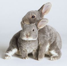 Fifty Shades Of Grey Adorable Animals: The Version You Aren't Embarrassed To Read In Public – Cute Animals Funny Bunnies, Baby Bunnies, Cute Bunny, Easter Bunny, House Rabbit, Pet Rabbit, Rabbit Cages, Animals And Pets, Cute Animals
