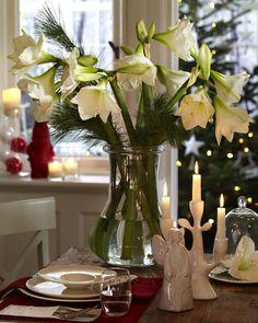 amaryllis floristik - Google-Suche
