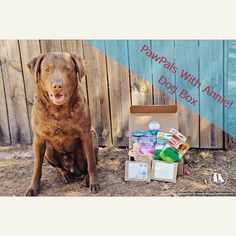 Freighter loves PawPals With Annie!  We have a review on the blog today.  Check it out and check out the discount code for $5 off.  Link to the blog on our profile.  @pawpals_with_annie #chesapeakebayretriever #pawpalswithannie #productreview