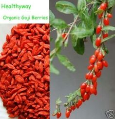 Goji Berries, (Og) (Wolfberry) - 5 Lbs Bag / Each by D'allesandro -- Awesome products selected by Anna Churchill