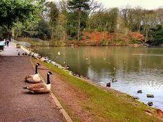 Willow Park (Newton-le-willows)
