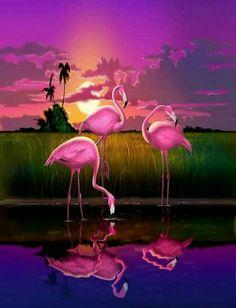 Flamingo Wallpaper, Butterfly Wallpaper, Animal Wallpaper, Colorful Wallpaper, Iphone Wallpaper, Mobile Wallpaper, Wall Wallpaper, Flamingo Painting, Flamingo Art