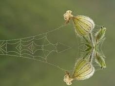 Image result for spider webs as a canvas