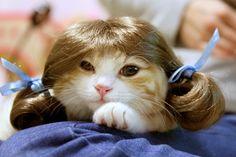 Cosplay Munchkin cat wig Kikunosuke