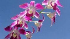orquideas-fungos