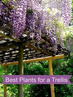 Selecting the best plants for a trellis or arch is essential for achieving the effect you are looking for in your garden. Here are a few great choices to consider. When selecting the best plants Diy Garden, Dream Garden, Lawn And Garden, Garden Projects, Garden Plants, Garden Landscaping, Bonsai Garden, Lush Garden, Landscaping Design