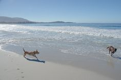 Another great reason to visit Carmel-by-the Sea - dog friendly beaches.