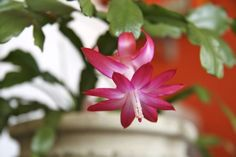 Keep Your Holiday Plants Looking Good, Long After the Holiday