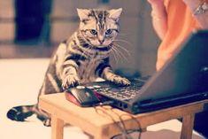 डिंग डांग वाली बिल्ली Cats, Blog, Animals, Gatos, Animais, Animales, Animaux, Blogging, Animal