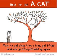 Image result for how to be a cat