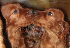 puppie-love