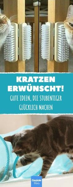 10 tricks for cats in the house.- 10 Tricks für Katzen im Haus. Your house tiger is bored to death? Then you need one of these 10 ideas. Diy Pet, Diy Cat Toys, I Love Cats, Cool Cats, Cat Entertainment, Boring To Death, Amor Animal, Cat Hacks, Gatos Cats