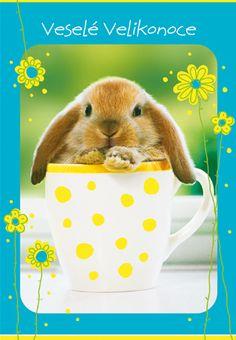 Rabbit, Animals, Bunny, Rabbits, Animales, Animaux, Bunnies, Animal Memes, Animal