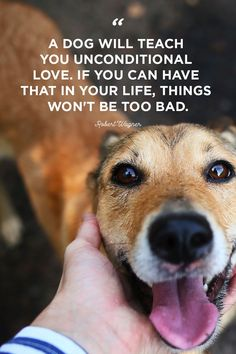 30 cute dog love quotes - puppy sayings and dog best friend quotes Animal Love Quotes, Dog Quotes Love, Funny Quotes For Teens, Funny Quotes About Life, Funny Sayings, Dog Qoutes, Sweet Sayings, Dog Quotes Funny, Funny Life