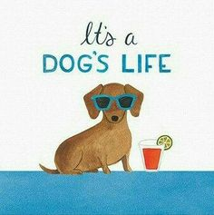 Let's face it - we all know our dogs are a little spoiled. This print features a dachshund chilling with sunglasses and a drink - this day has gone to the dogs Dachshund Breed, Dachshund Art, Long Haired Dachshund, Daschund, Scottish Terrier, I Love Dogs, Puppy Love, Best Apartment Dogs, Clever Dog