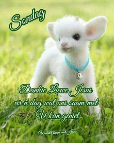 Beautiful Bible Quotes, Goeie Nag, Goeie More, Afrikaans, Good Morning, Beautiful Pictures, Animals, Sayings, Good Day