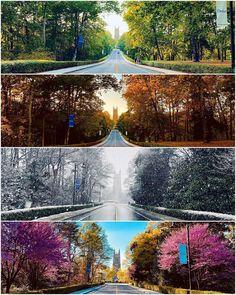 Duke Blue Devils, Duke University, Summer Photography, Durham, Sweet Home, Change, Seasons, Mansions, House Styles