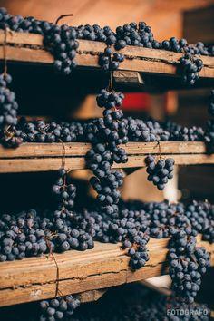 Reportage di vendemmia per Agricola Cottini in Valpolicella | Lorenzo Rui | Fotografo commerciale a Vicenza