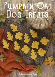 DIY Pets : A Special Treat For Your Furry Friends! Organic Pumpkin Oatmeal Dog Treats Recipe A Special Treat For Your Furry Friends! Organic Pumpkin Oatmeal Dog Treats… Sharing is caring, don't forget to share ! Puppy Treats, Diy Dog Treats, Homemade Dog Treats, Dog Treat Recipes, Healthy Dog Treats, Dog Food Recipes, Recipe Treats, Fall Treats, Food Tips