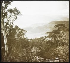 The original inhabitants of the Myrtleford area were the Pangerang, Minjambuta, Duduroa and Jaitmathang (Ya-itma-thang) peoples. View of Mt. Buffalo from Mackay's Lookout over the Ovens and Buckland Valleys, by John Henry Harvey circa 1855-1938. Source: State Library of Victoria. The North East Victorian Migration Story by Samantha Dinning http://windsky.com.au/the-north-east-victorian-migration-story/