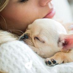 French Bulldog Puppy #Buldog