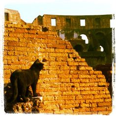 Rome, cat at Colosseum #myphoto