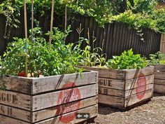 raised vegetables planters from the little vegie patch co as seen on kelly green blog