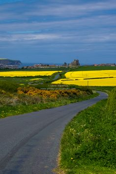 Abbey Fields In Yellow (Portrait), Whitby N.Yorks