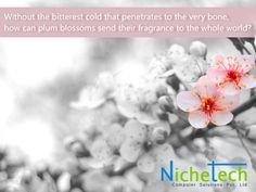 NicheQuotes: Without the bitterest cold that penetrates to the very bone,  how can plum blossoms send their fragrance to the whole world?