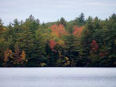 Foiliage at Bunganut Lake in Lyman, Maine (10-5-13).