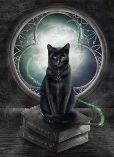 La magia del Gato negro...