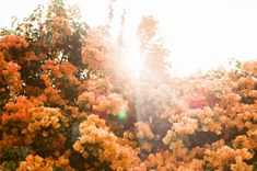 Photo Diary: LA in Bloom - Urban Outfitters - Blog