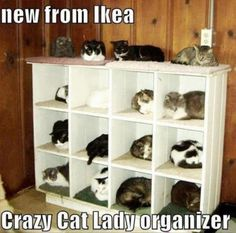 No crazy cat lady would be complete without one