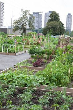 """Fight poverty with urban agriculture """"Vacant parcels and warehouses can be put to use as yearlong urban farms, utilizing such tools as hoop greenhouses with plastic coverings. The city's schools and parks, as well as Richmond Redevelopment and Housing Authority properties have plenty of acreage that could grow produce."""""""
