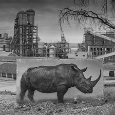 Nick Brandt uses his moody portraits of elephants, giraffes, and lions to call attention to Africa's vanishing megafauna. His latest series, 'Inherit the Dust,' imagines these beautiful creatures wandering landscapes they've long since been driven out of. More at WIRED.com. ( Nick Brandt) Teaching Habitats, Nick Brandt, Latest Series, Gcse Art, Pet Portraits, Beautiful Creatures, Lions, School Ideas, Giraffe