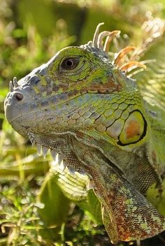 Reptile - gorgeous image