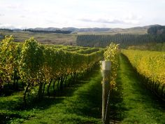 to visit 10 different vineyards in different areas of our country or world.