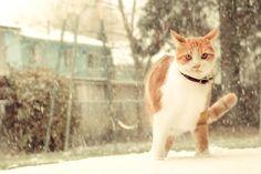First Snow by Keylove.deviantart.com on @deviantART
