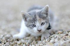 Kitten Season 101 | PAWS