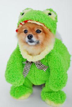 DIY No-Sew Small Dog Costume