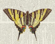 butterfly - vintage swallowtail butterfly II artwork printed on page from old dictionary