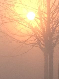 Foggy day Carving, Celestial, Sunset, Day, Pictures, Outdoor, Sunsets, Photos, Outdoors