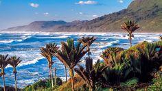 Queen Charlotte 20 Tage Wunderwelten-Reise. Küste der Halbinsel Coromandel (© Chamäleon)