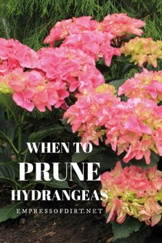 This simple guide describes the 6 basic types of hydrangeas, so you can know which ones you are growing and how to best care for them. Flower Garden, Amazing Gardens, Types Of Hydrangeas, Plants, Growing Hydrangeas, Beautiful Flowers Garden, Garden Types, When To Prune Hydrangeas, Gardening Tips