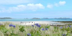 Beach with agapantha Scilly