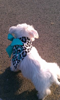Custom Small Dog Bandana by CreationsbyJac on Etsy, $16.99 @Shelby Barton  Cute idea! sew a ribbon on to the fabric for easier tie! ;)