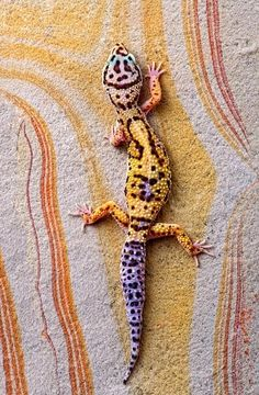 G is for ... Gecko (leopard)